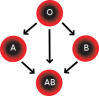 Blood groups: A,B,O & co